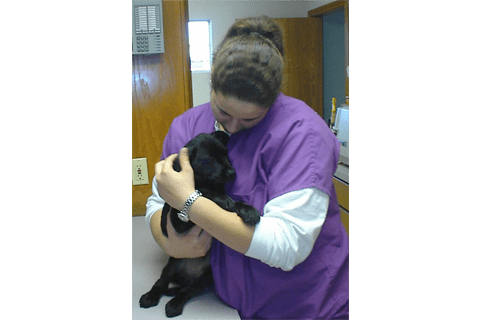 A team member cuddling a black puppy